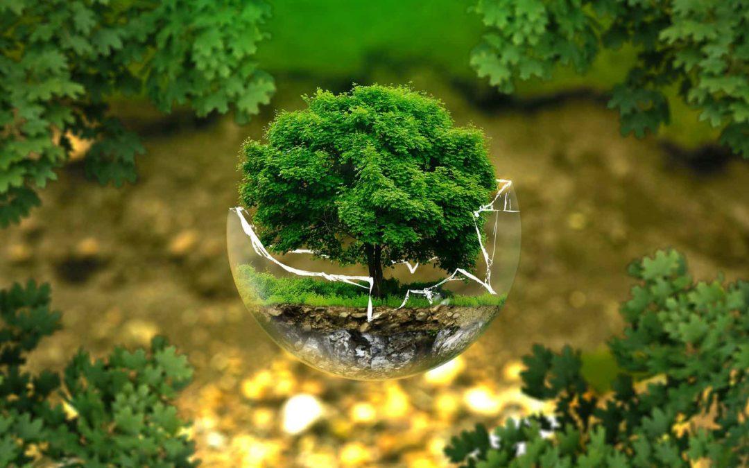 EcoFrog: sistema eficaz para reduir la contaminación por plásticos